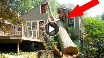 TREE CUTTING FAILS. EPIC COMPILATION