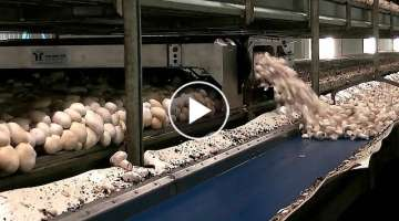 Amazing Food Processing Machines