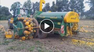 World Amazing Modern Agriculture Mega Machines Harvesters: Pumpkin and Squash Field Fertilizing