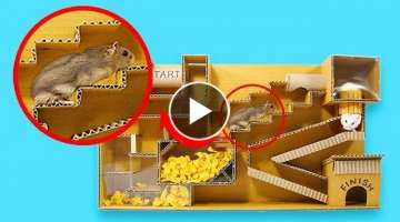Three Cute Hamsters Toto Chip And Mochi Discover Labyrinth Of Stairs From Cardboard