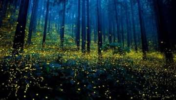 How to Attract Fireflies to Your Home
