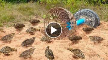 Awesome Quick Bird Trap Using Tire Car And PVC - How To Make Bird With Water Pipe Work 100%