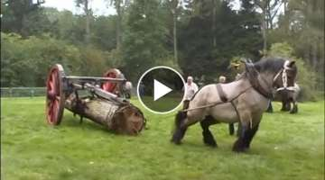 THE STRONGEST Draft Horse