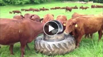Intelligent Technology Smart Farming Automatic milking machine, Feeding, Cleaning Cow Goat