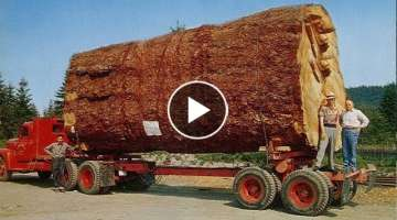 A rare glimpse of the large piece of wood transport process! This handling technology, after read...