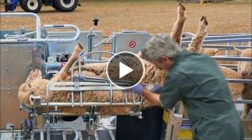 These animal machines will blow your mind. - Modern Cow Milking Automatic Machine.