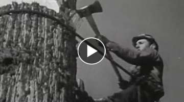 1940s Lumberjacks felling Redwoods in Northern California