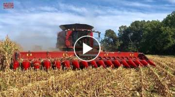 2019 Corn Harvest 16 Rows At a Time: Case IH 9240 Combine