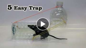 5 Easy Mouse/Rat Trap