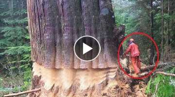 Extreme Dangerous Huge Trees Felling Skill Climbing With Chainsaw Machines Tree Cutting Down Skil...