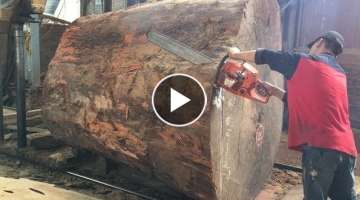 Amazing Dangerous Chainsaw Skills Giant Tree - Dangerous Biggest Wood Sawmill Machine Working
