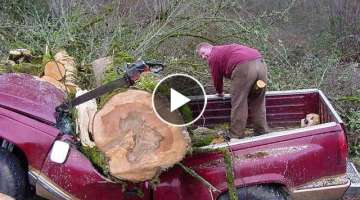 Tree Cutting Fails And Idiots With Chainsaws 2