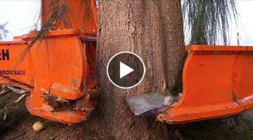 Dangerous Biggest Tree Cutting Long Reach Excavator Skill , Tree Harvesting Machine Heavy Equipme...