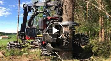 World's Modern Long Reach Excavator Machine Working - Heavy Equipment Cutting Big Tree Machine