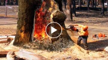 Dangerous Hazard Tree Felling in Wildfires Creek Fire , Lumberjack Tree Cutting Down with Chainsa...