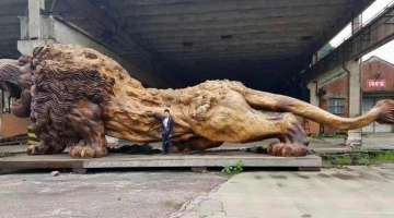 Incredible Wooden Lion Carved from a Single Tree (10 photos)