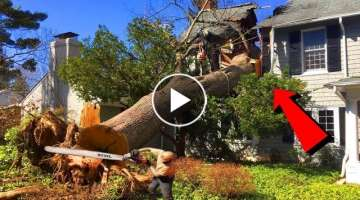 Idiots Tree Felling Fails | Trees fall into HOUSES, HEADs and CARs