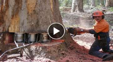 Amazing Modern Techniques Chainsaw Tree Felling and Woodturning Heavy Wood Sawmill Machine Workin...