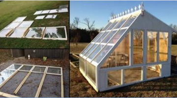 He Builds a Greenhouse from Old Windows