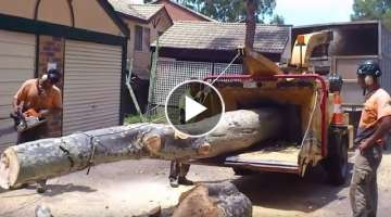 Dangerous Skill Cutting & Wood Chipper Machine Working - Extreme Processor Big Tree Chainsaw